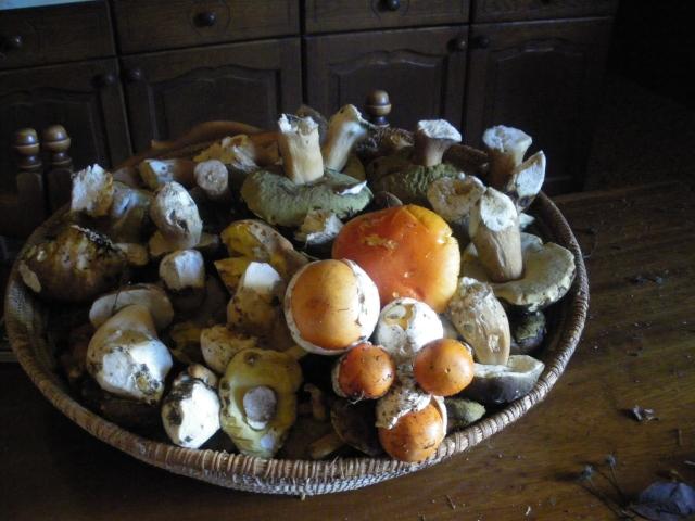Porcini and Ovuli mushroom